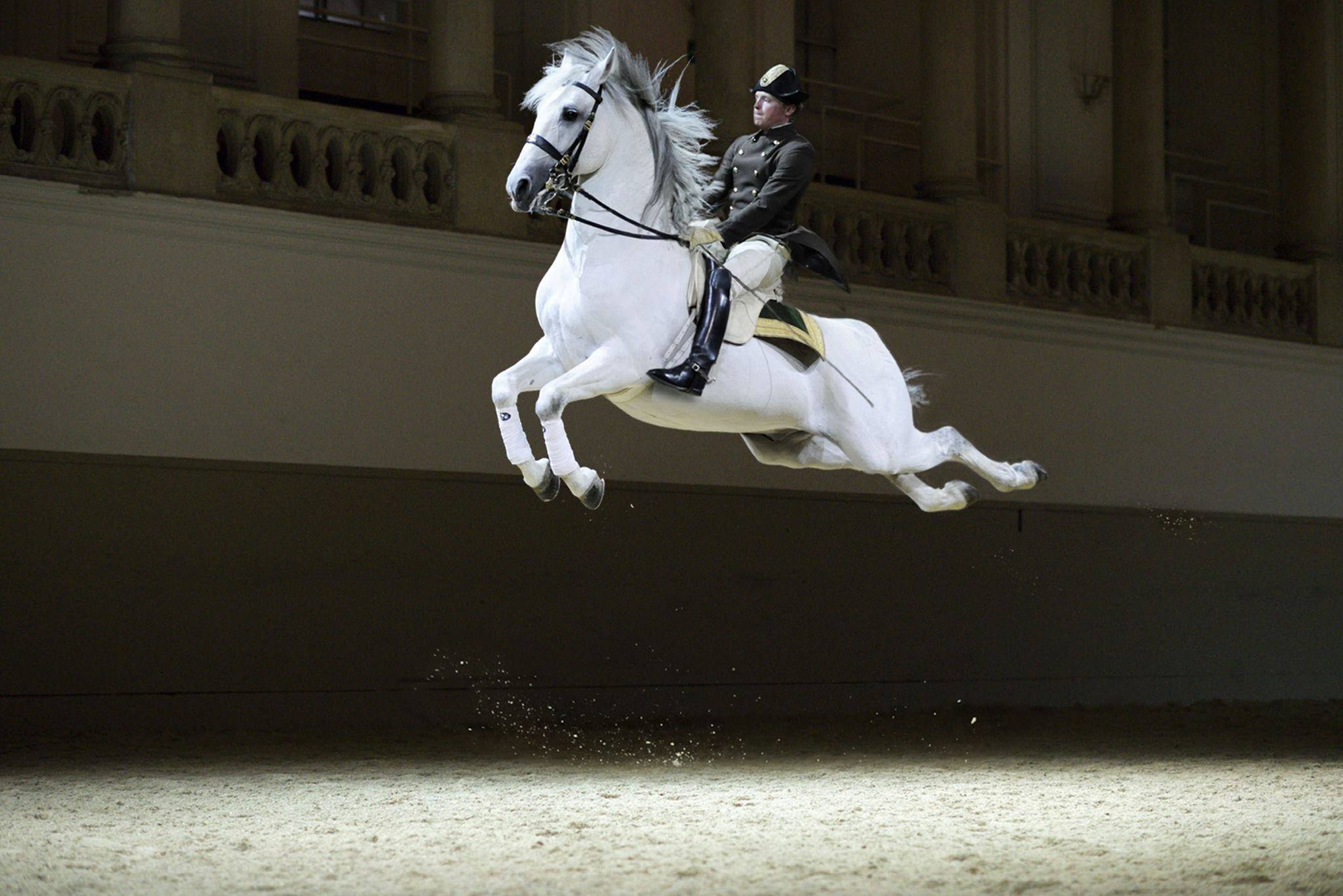 The Spanish Riding School Wake Up And Smell The Joy